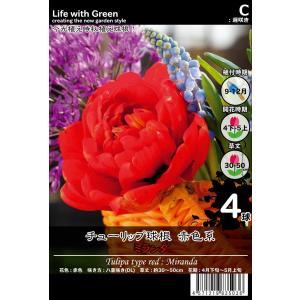 チューリップ 球根 赤色系 八重咲き(DL) ミランダ [Life with Green] life-with-green