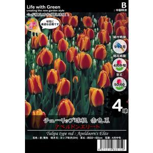 チューリップ球根 赤色系 カップ咲き(DH) アペルドンエリート [Life with Green] life-with-green