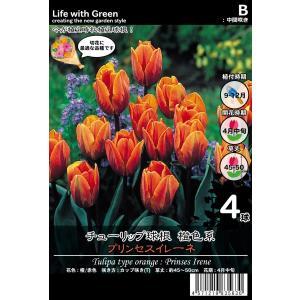 チューリップ球根 橙色系 カップ咲き(T) プリンセスイレーネ [Life with Green] life-with-green