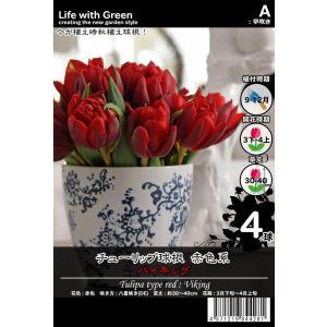 チューリップ球根 赤色系 八重咲き(DE) バイキング [Life with Green] life-with-green