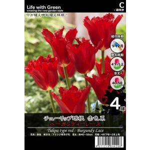 チューリップ球根 赤色系 フリンジ咲き(FR) バーガンディーレース [Life with Green] life-with-green