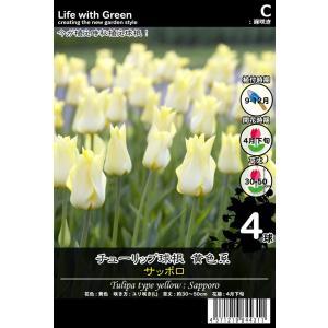 チューリップ球根 黄色系 ユリ咲き(L) サッポロ [Life with Green] life-with-green
