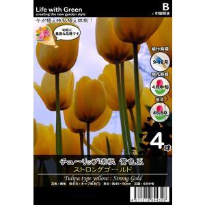 チューリップ球根 黄色系 カップ咲き(T) ストロングゴールド [Life with Green] life-with-green