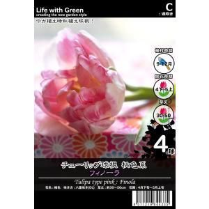 チューリップ球根 桃色系 八重咲き(DL) フィノーラ [Life with Green] life-with-green