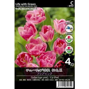 チューリップ球根 桃色系 八重咲き(DL) アップピンク [Life with Green] life-with-green