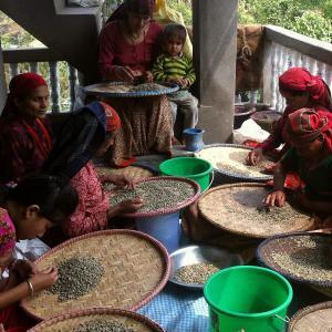 送料無料 ネパール(オーガニック自家焙煎コーヒー豆1kg) link-coffee