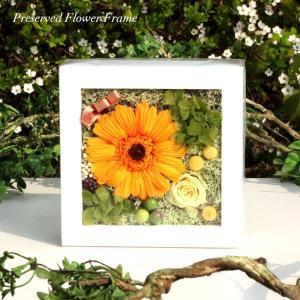 フルーティーオレンジのガーベラミニフレーム lpm0120 イメージ1
