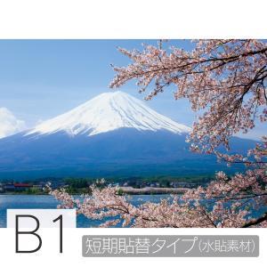 お風呂ポスター 満開の桜と富士山 B1 短期貼替タイプ(水貼素材) littleoasis