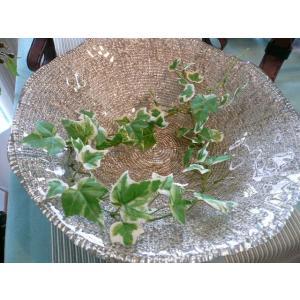 IVV イタリア製 大皿 ガラス皿 Diamante ディアマンテ シャンパンゴールド 33cm プレート(5532-9)|livingts