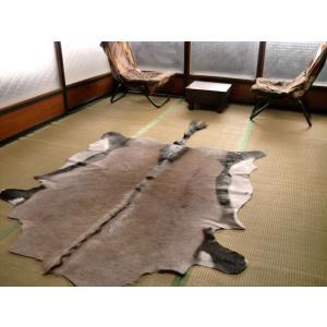 オリックス敷物約220×147cm■毛皮壁掛 オブジェ♯F剥製革ラグ■アニマル皮本革敷物カーペット 室内|local-tokitoki