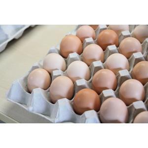 「やますけ農園」妻のためのたまご(4個入り)「烏骨鶏」 localtoglobal