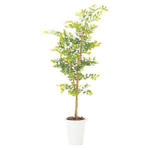 ゴールデンリーフ 観葉植物 人工植物 人工観葉植物 G-GL|lookit