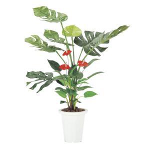 モンステラ&アンスリューム 人工 観葉植物 ギフト G-MS|lookit
