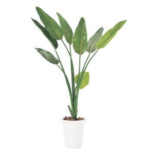 ストレチア 人工観葉植物 環境 抗菌 ギフト 贈り物 G-S|lookit