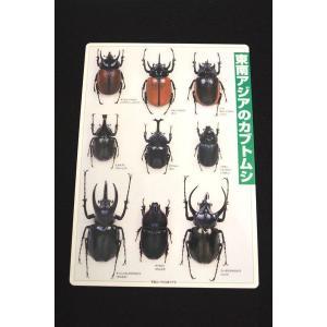 下敷 東南アジアのカブトムシ lovelyinsect