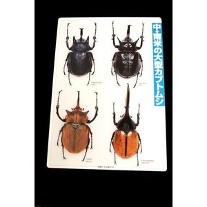 下敷 中南米の大型カブトムシ lovelyinsect