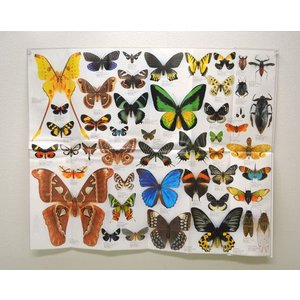 世界の昆虫ポスター lovelyinsect
