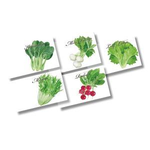 横型イラスト野菜の種子 500個販売 野菜の種|lucky-merci