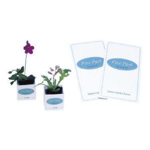花の栽培セット ファインパック (091)【種類指定不可】 50個販売 まとめ割 卓上サイズの花の栽培セット ノベルティ 販促品 粗品 記念品 景品|lucky-merci