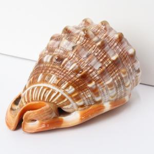 巻貝 貝殻 置物 巻き貝 ほら貝 貝 天然石