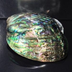 アバロンシェル 貝殻 パウア貝 パウアシェル 浄化用 皿 アバロン貝 一点物