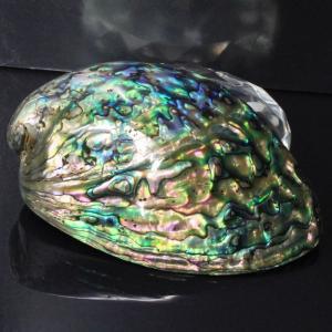 アバロンシェル 貝殻 パウア貝 パウアシェル 浄化用 皿 アバロン貝 天然石