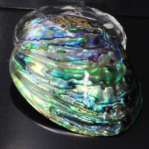アバロンシェル 貝殻 パウア貝 パウアシェル さざれ 皿 浄化セット 一点物
