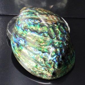 アバロンシェル 貝殻 パウア貝 パウアシェル 浄化用 皿 アバロン貝 厳選 一点物