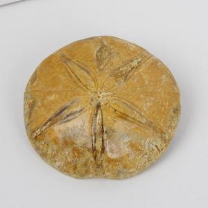 ヒトデ 化石 原石 Gemstone サンゴ fossil 天然石