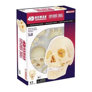 立体パズル 4D VISION 人体解剖 No.23 1/2 頭蓋骨解剖モデル|m-onlineshop