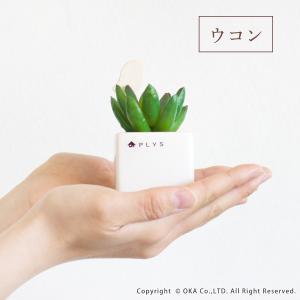 PLYS green(プリスグリーン) プリスグリーン|m-rug|06