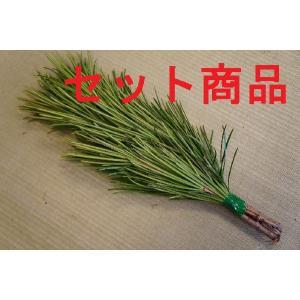 高野槇(コウヤマキ)No.03 10束セット/2本〜6本組み(本数指定不可) 30cm-35cm|m-t-s