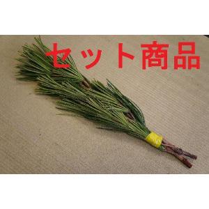高野槇(コウヤマキ)No.04 10束セット/2本〜3本組み(本数指定不可) 40cm-45cm|m-t-s