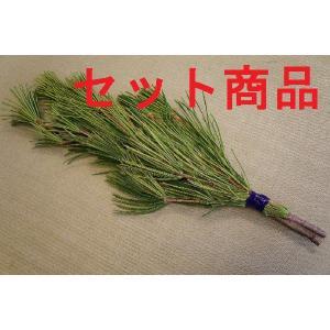高野槇(コウヤマキ)No.05 10束セット/2本1組 50cm-55cm|m-t-s