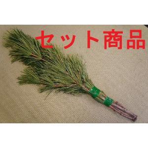 高野槇(コウヤマキ)No.06 10束セット/2本1組 60cm-65cm|m-t-s