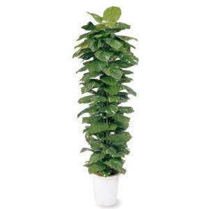 人工植物 ヘゴ付ポトス 鉢付 1.8m 室内用 |m1shop