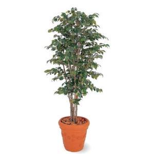 人工植物 ベンジャミンナチュラル 鉢付 1.8m 室内用 |m1shop