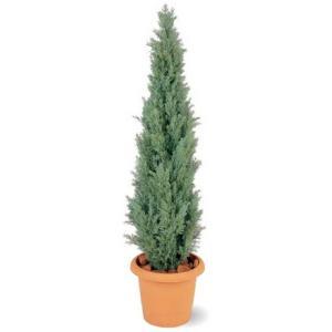 人工植物 ヒバツリー 鉢付 1.5m 室内用 |m1shop