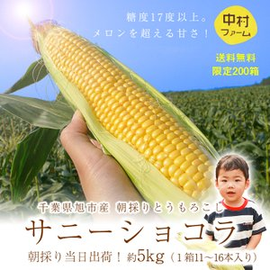 千葉県産 トウモロコシ 産直野菜 中村さん家のとうもろこし サニーショコラ 約5kg maampig