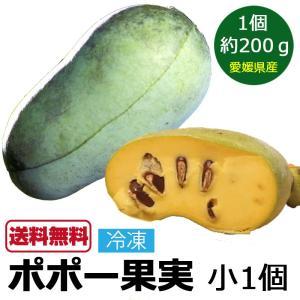 ポポーの実 ポポー 小サイズ×1個 果物 マンゴーのような果実 国産 愛媛県 ぽぽー ポーポー 名医のTHE太鼓判