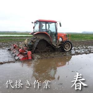 米 24kg 玄米 8kg×3袋小分け 令和元年 青森県産 ふるさとのお米|maeda-rice|03