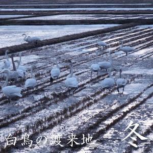 米 24kg 玄米 8kg×3袋小分け 令和元年 青森県産 ふるさとのお米|maeda-rice|06