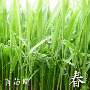 米 20kg 白米 10kg×2袋小分け 令和元年 青森県産 産直米|maeda-rice|03