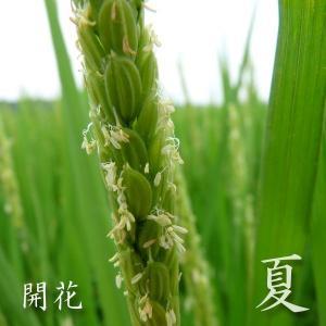 米 20kg 白米 10kg×2袋小分け 令和元年 青森県産 産直米|maeda-rice|04
