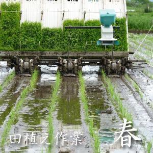米 20kg 白米 10kg×2袋小分け 令和元年 青森県産 ふるさとのお米|maeda-rice|03