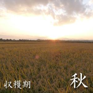 米 3kg 白米 令和元年産 青森県産 ふるさとのお米 送料無料 日本郵政レターパックプラス発送 対面配達 代引き不可 日時指定不可|maeda-rice|05