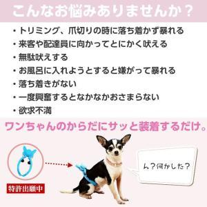 犬 のしつけに ぶるぴた 2個セット 吠える犬、走りまわる犬がピタリと落ち着く トリマーの必需品 (使い方・大山田式 犬の しつけ DVD付)日本製|maedaya|05