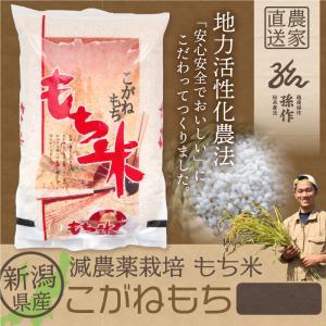 もち米 こがねもち 精米 1Kg 1等米|magosaku-food