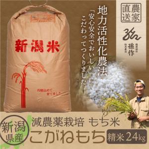 もち米 こがねもち 精米 24Kg 1等米|magosaku-food