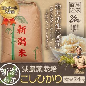 減農薬栽培米 コシヒカリ 玄米 24Kg 新潟県産 こしひかり|magosaku-food